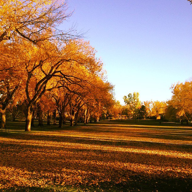 Colorado State University - Fort Collins